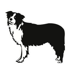 Free SVG File Download – Border Collie Dog