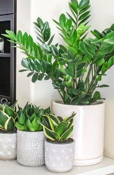 ZZ Plant and Snake Plants - Top 8 low maintenance house plants for beginners - M. ZZ Plant and Sna Low Maintenance Indoor Plants, Low Maintenance Garden, Plante Zz, Plantas Indoor, Best Indoor Plants, Indoor House Plants, Outdoor Plants, Plants In The House, Plants For Patio