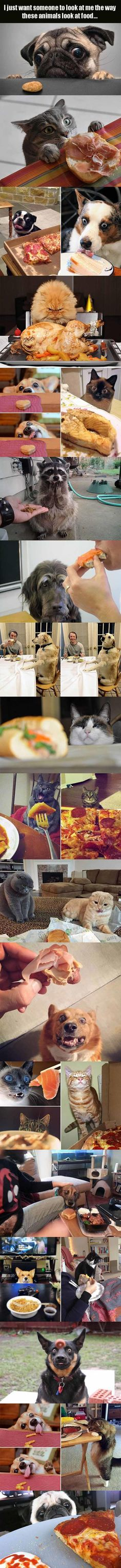 I Just Want Someone To Look At Me, The Way These Animals Look At Food - 18 Pics
