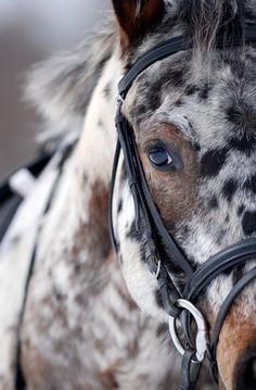 photos de chevaux