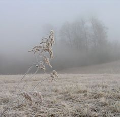 Weather Folklore of the Day: The number of fogs in autumn tells the number of snows in winter.