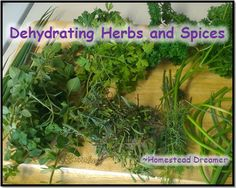 """Dehydrating Herbs and Spices 