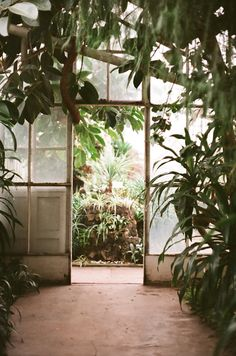 Glass house- reminds me of the botanical gardens back home