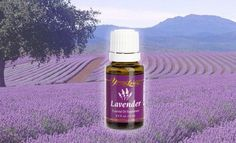 Lavender is considered the most universal of all essential oils. With its fresh, floral scent, therapeutic-grade lavender oil is highly regarded as a skin and beauty tonic. Is it helpful for facial blemishes and can also be used to soothe and cleanse common cuts, bruises, and skin irritations. Lavender helps the body relax and helps you to sleep when rubbed on the bottoms of the feet or inhaled at bedtime.