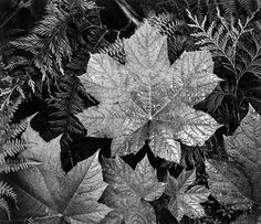Photography ansel adams 1902 1984 on pinterest ansel for Ansel adams mural project 1941 to 1942