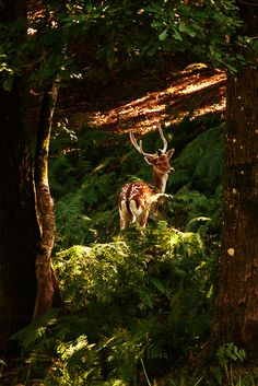 The clearest way into the Universe is through a forest wilderness.  ~John Muir~❤️