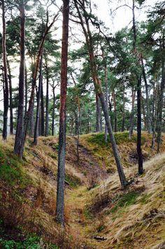 forested area in Porvoo © Eliisa Väisänen