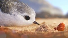"""In Pixar Animation Studios' new short, """"Piper,"""" a hungry sandpiper hatchling discovers that finding food without mom's help isn't so easy. Lyric Text Prank, Lyric Pranks, Piper Pixar, Piper Bird, Animation Tools, Animation Studios, Pixar Shorts, Boop Gif, Social Determinants Of Health"""