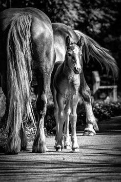 baby hourse by Joan Abella, via 500px