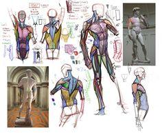 Anatomía, estudio.