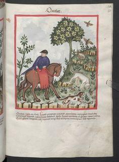 Cod. Ser. n. 2644, fol. 68r: Tacuinum sanitatis: Qualee