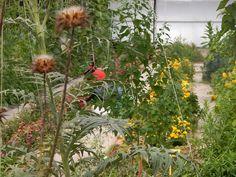 Más #Plantas y #Flores