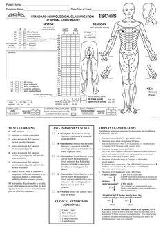 Spinal cord injury C3/4, C4/5, C5/6 T12 L3, L4, L5, S1
