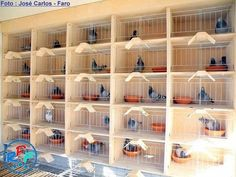 Pigeon loft design ideas and pigeon loft plan – Loft İdeas 2020 Cage Pigeon, Pigeon Nest, Backyard Chicken Coops, Chickens Backyard, Pigeon Loft Design, Racing Pigeon Lofts, Pigeons For Sale, Pigeon Pictures, Pigeon House
