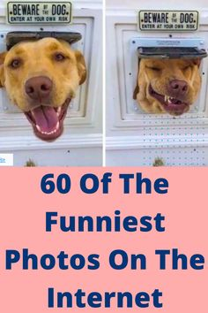 60 Of The Funniest Photos On The Internet