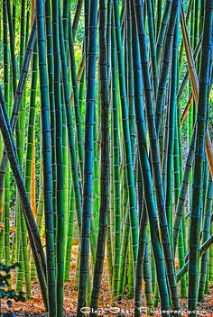 076 Huntington 'Bamboo Forest' ~ | Flickr - Photo Sharing!