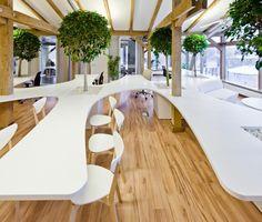 Árboles para dar un toque natural a la oficina