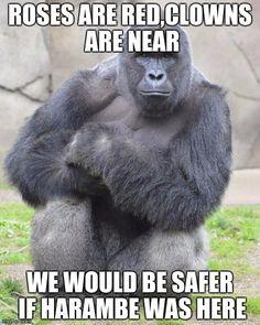 The Dark Internet Humor of Harambe Jokes Why the web is still joking about the gorilla. Harambe Meme, Dankest Memes, Dead Memes, Funny Memes, Primates, Roses Are Red Memes, Gorillas In The Mist, Silverback Gorilla, Cincinnati Zoo