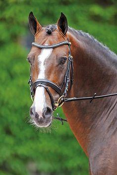 cavalli purosangue inglese in regalo 50 shades of darker movie premiere