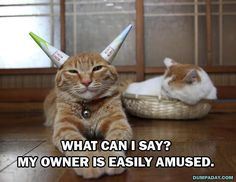 Dump A Day Attack Of The Funny Animals - 35 Pics