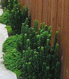 dog pee proof plants - definitely need these!