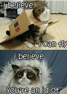 Yes grumpy cat