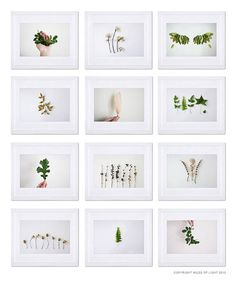 Natural Home Decor. Indoor garden botanical Examples of different styles of plant photography.Examples of different styles of plant photography. Indoor Garden, Indoor Plants, White Background Photography, Cactus E Suculentas, Green Plants, Botanical Art, Botany, Nature Photography, Photography Flowers