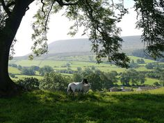 The picturesque village of Downham which is set at the foot of Pendle Hill - photo  Sue Bristo
