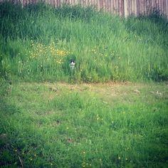 Spot the cat   #hidingcat #spotthecat #catstagram #pets #catworld #whiskers #mummycat by neesi.ibrahim