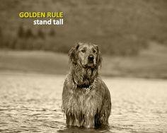 get best insurance coverage for your dog  http://www.facebook.com/GetBetPetInsuranceQuote?ref=hl  getpetinsurancequote.com