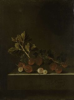 Adriaen Coorte, A Sprig of Gooseberries on a Stone Plinth, 1699, oil on panel, Rijksmuseum, Amsterdam.