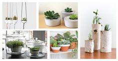 Rośliny we wnętrzach odgrywają wiele bardzo ważnych funkcji. Są również elementem bardzo dekoracyjnym, przy którym dobrze się czujemy. #rośliny #wnętrze #dom #mieszkanie #inspiracje #dekoracje #aranżacja