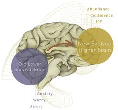 higher brain