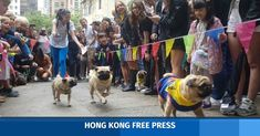In Pictures: 'Daschunds vs. pugs' doggie dash raises funds for Hong Kong Dog Rescue