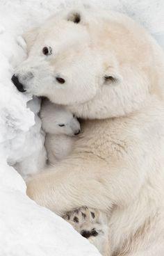 beautiful-wildlife    Mother's Love by Olga Scheglova  Bron:500px.com