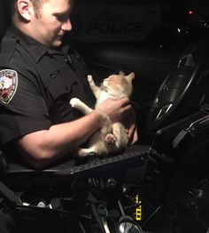 A friendly stray cat gave a police officer quite a surprise when he jumped into his car through an open window and refused to leave. It was early Friday morning when officer Butler of Oxford Police Department (in Ohio) came across a friendly feline who hopped into his cruiser demanding attenti...