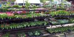 Nursery is all stocked up and full of color