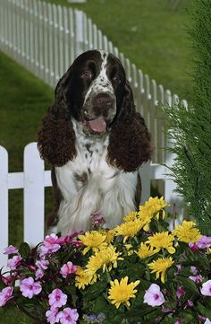 How To Keep Dogs From Digging Holes In Flower Beds