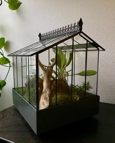 "Shannon Edwards on Instagram: ""New layout for my wards case. I bought a bunch of moss from @tinrooftreasure and had to incorporate it in! I have a couple orchids mounted…"" Rock Path, Terrariums, Trellis, Bird Houses, Orchids, Layout, Couple, Stuff To Buy, Instagram"