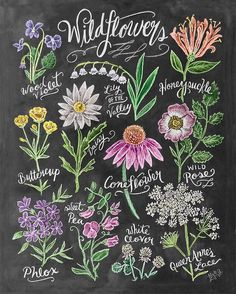 """Our Wildflower Field Guide print has us dreaming of flowers & spring blooms! We're so ready for Spring! Available on lilyandval.com. #springdreaming…"""