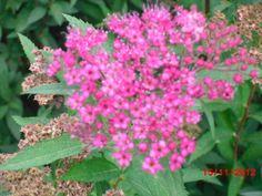 Flores - Le Jardin - Gramado - RS. Brasil