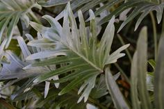 Flori care cresc fara pamant. Frumuseti fara pic de murdarie Easy Plants To Grow, Easy Care Plants, Cool Plants, Green Plants, Live Plants, Growing Plants, Natural Pesticides, Low Light Plants, Iron Plant