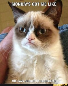 Hilarious Memes That'll Make You Lose It Memes have become part of our lives now. Every time you scroll any social media, you'll see lots and lots of memes. Funny Grumpy Cat Memes, Funny Cats, Funny Animals, Funny Memes, Grumpy Quotes, Grumpy Kitty, Cat Jokes, Car Memes, Animal Memes