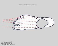 Directions of the toes