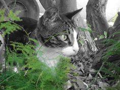Modelling in the Garden