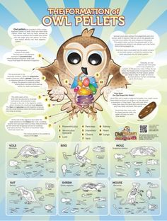 The Formation of Owl Pellets Poster - How Owl Pellets Are Formed