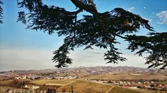 #Langhe #Barolo#Unesco#vineyard