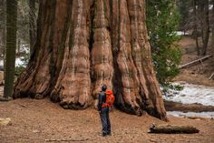 A Spring Spin Through Sequoia & Kings Canyon National Parks | California
