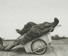 Godzilla in a cart