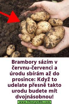 Potatoes, Gardening, Vegetables, Food, Potato, Lawn And Garden, Essen, Vegetable Recipes, Meals